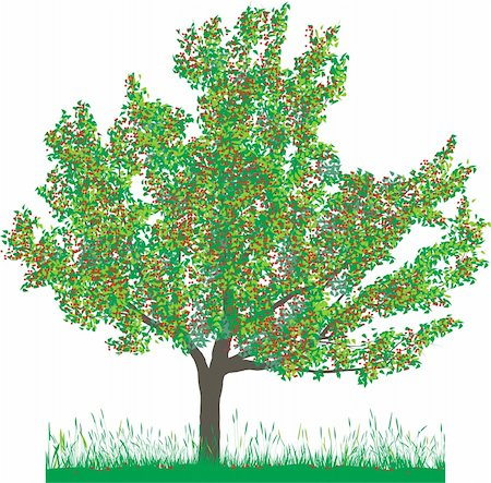 Vector illustration of cherry tree in summer Stock Photo - Budget Royalty-Free & Subscription, Code: 400-05200586