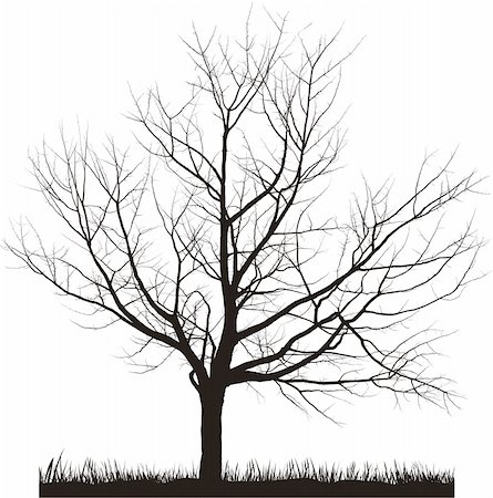 Vector illustration of cherry tree in winter Stock Photo - Budget Royalty-Free & Subscription, Code: 400-05200587