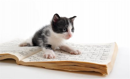 young black and white kitten and music book Stock Photo - Budget Royalty-Free & Subscription, Code: 400-05219153
