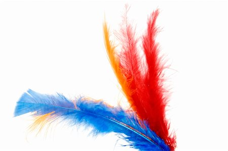 some colored feathers isolated on a white background Stock Photo - Budget Royalty-Free & Subscription, Code: 400-05220850