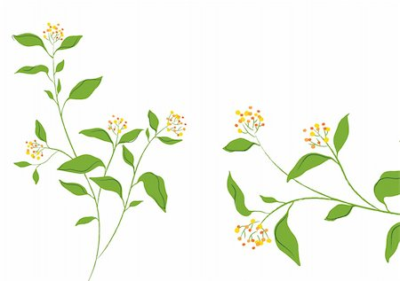 simsearch:400-04697977,k - illustration drawing of beautiful flower in a white background Stock Photo - Budget Royalty-Free & Subscription, Code: 400-05235160