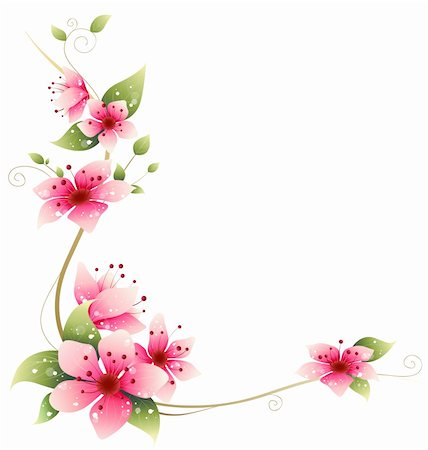 simsearch:400-04697977,k - drawing of beautiful  sakura flower in a white background Stock Photo - Budget Royalty-Free & Subscription, Code: 400-05236602
