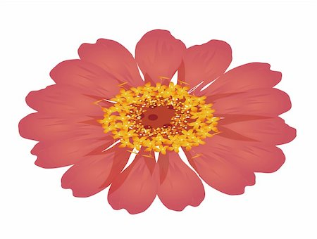 simsearch:400-04697977,k - illustration drawing of a red daisy flower isolate  in a white background Stock Photo - Budget Royalty-Free & Subscription, Code: 400-05233054