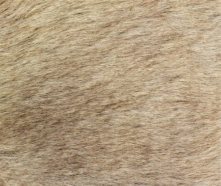A closeup image of kangaroo fur. Great for texture, background or wallpaper. Stock Photo - Budget Royalty-Free & Subscription, Code: 400-05243160