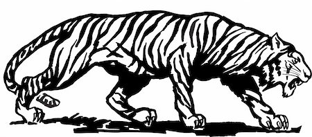 Vector abstract illustration. The white predatory tiger. Stock Photo - Budget Royalty-Free & Subscription, Code: 400-05250519