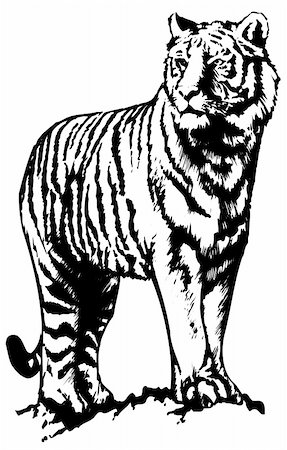 Vector abstract illustration. The white predatory tiger. Stock Photo - Budget Royalty-Free & Subscription, Code: 400-05250524