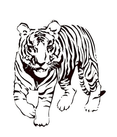 Vector abstract illustration. The white predatory tiger. Stock Photo - Budget Royalty-Free & Subscription, Code: 400-05250521