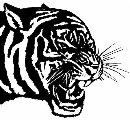 Vector illustration .The white predatory tiger head, Stock Photo - Budget Royalty-Free & Subscription, Code: 400-05250523