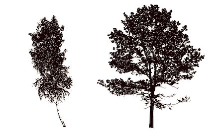 vector silhouettes tree on white background Stock Photo - Budget Royalty-Free & Subscription, Code: 400-05265444