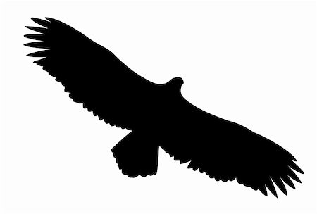 simsearch:400-04399778,k - vector silhouette of the ravenous bird on white background Stock Photo - Budget Royalty-Free & Subscription, Code: 400-05266063