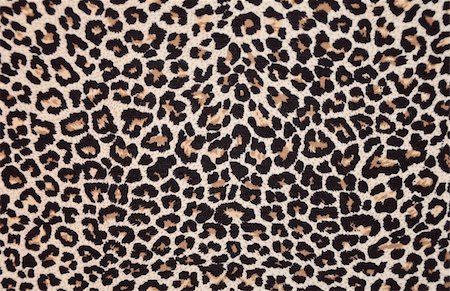 abstract texture of leopard skin Stock Photo - Budget Royalty-Free & Subscription, Code: 400-05266873