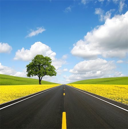 road landscape - The road forward Stock Photo - Budget Royalty-Free & Subscription, Code: 400-05269374