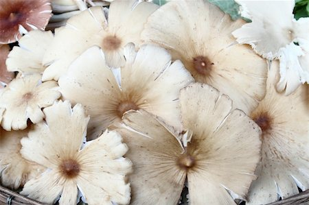 group of mushrooms Stock Photo - Budget Royalty-Free & Subscription, Code: 400-05284846