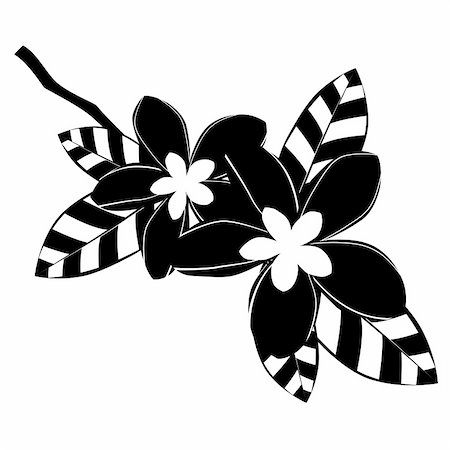 Stylized black and white flowers on white background Stock Photo - Budget Royalty-Free & Subscription, Code: 400-05287404
