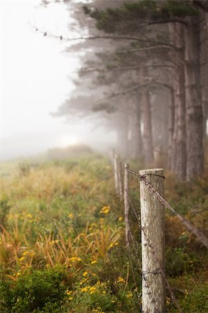 Line of trees and fence in the mist Stock Photo - Budget Royalty-Free & Subscription, Code: 400-05294498