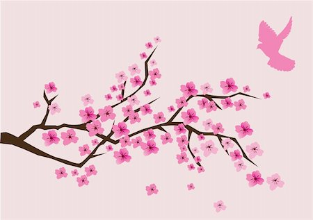 vector illustration of cherry blossom with pink dove Stock Photo - Budget Royalty-Free & Subscription, Code: 400-05295222