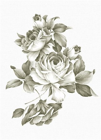 Old-styled rose. Freehand drawing Stock Photo - Budget Royalty-Free & Subscription, Code: 400-05299134