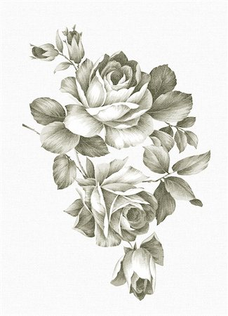 Old-styled rose. Freehand drawing Stock Photo - Budget Royalty-Free & Subscription, Code: 400-05299135