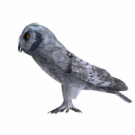 Scops Owl Bird. 3D rendering with clipping path and shadow over white Stock Photo - Budget Royalty-Free & Subscription, Code: 400-05301798