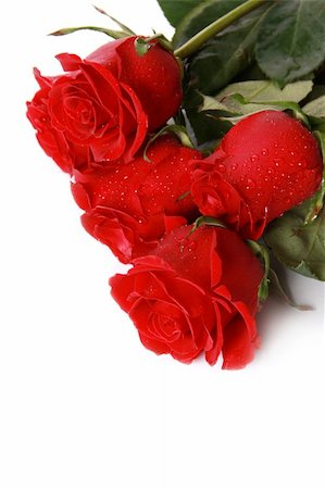 dozen roses - Beautiful red roses on a white background with space for copy. Stock Photo - Budget Royalty-Free & Subscription, Code: 400-05302391