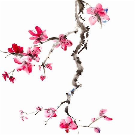 Chinese painting of flowers, plum blossom, on white background. Stock Photo - Budget Royalty-Free & Subscription, Code: 400-05310580