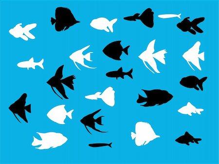 piranha fish - aquarium fish silhouette - vector Stock Photo - Budget Royalty-Free & Subscription, Code: 400-05335213