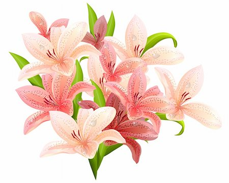 florist vector - Big bunch of lilies isolated on white background Stock Photo - Budget Royalty-Free & Subscription, Code: 400-05366004