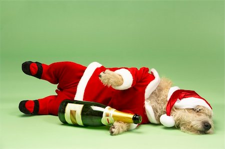 drunk passed out - Samll Dog In Santa Costume Lying Down With Champagne Bottle Stock Photo - Budget Royalty-Free & Subscription, Code: 400-05374668