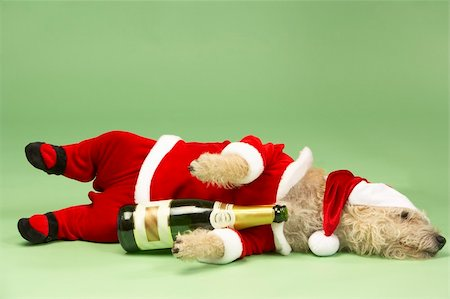 drunk passed out - Small Dog In Santa Costume Lying Down With Champagne Bottle Stock Photo - Budget Royalty-Free & Subscription, Code: 400-05374669