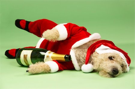 drunk passed out - Small Dog In Santa Costume Lying Down With Champagne Bottle Stock Photo - Budget Royalty-Free & Subscription, Code: 400-05374670