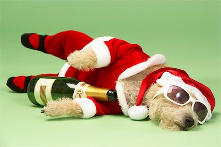 drunk passed out - Small Dog In Santa Costume Lying Down With Champagne and Shades Stock Photo - Budget Royalty-Free & Subscription, Code: 400-05374671