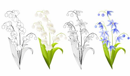 Collection of spring flowers isolated on white background. Colour and contour versions. Stock Photo - Budget Royalty-Free & Subscription, Code: 400-05371237