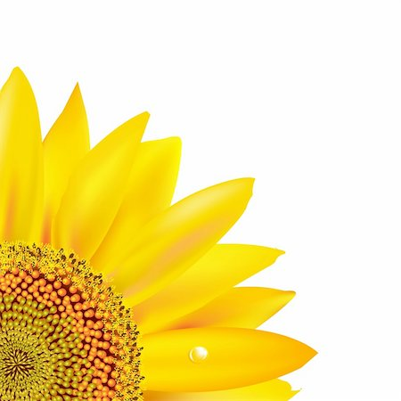 florist vector - Sunflower, Isolated On White Background, Vector Illustration Stock Photo - Budget Royalty-Free & Subscription, Code: 400-05385482