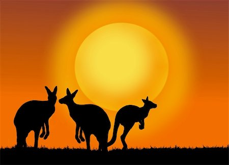 kangaroo on the sunset Stock Photo - Budget Royalty-Free & Subscription, Code: 400-05388139