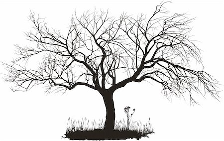 vector drawing of an old apple tree Stock Photo - Budget Royalty-Free & Subscription, Code: 400-05383164