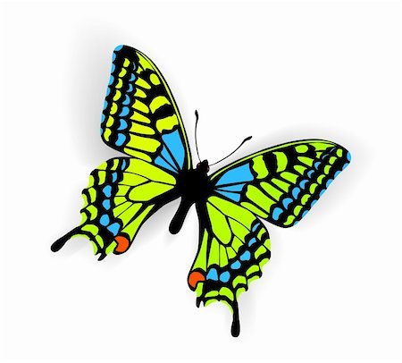 Butterfly Vector Illustration with shadow on white background Stock Photo - Budget Royalty-Free & Subscription, Code: 400-05665095