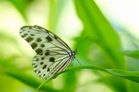 butterfly with green background Stock Photo - Budget Royalty-Free & Subscription, Code: 400-05679188