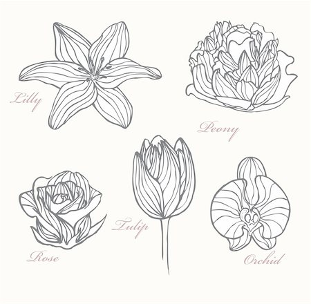 peony art - Set of flowers Stock Photo - Budget Royalty-Free & Subscription, Code: 400-05685231