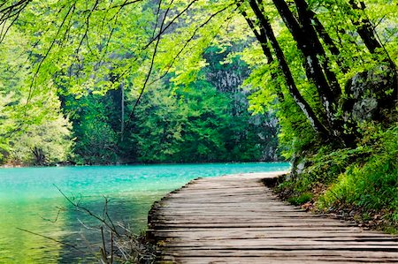 Wooden path near a forest lake Stock Photo - Budget Royalty-Free & Subscription, Code: 400-05680161