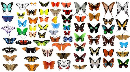 Big vector collection of butterflies Stock Photo - Budget Royalty-Free & Subscription, Code: 400-05692730