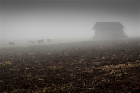 An image of a landscape and cows with fog in bavaria germany Stock Photo - Budget Royalty-Free & Subscription, Code: 400-05719675