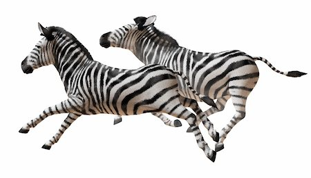 running zebra Stock Photo - Budget Royalty-Free & Subscription, Code: 400-05721450