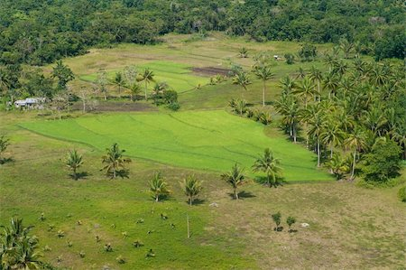 philippine terrace farming - small rice field on Bohol, Philippines Stock Photo - Budget Royalty-Free & Subscription, Code: 400-05738866
