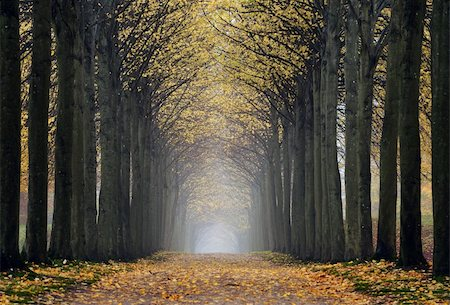 Path in an old park a misty autumn day Stock Photo - Budget Royalty-Free & Subscription, Code: 400-05730833