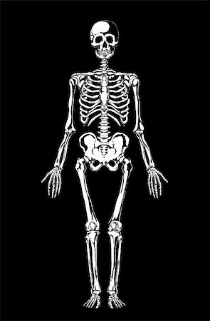 White skeleton on black. Separate layers. Vector illustration Stock Photo - Budget Royalty-Free & Subscription, Code: 400-05732543