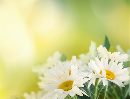 Summer or spring abstract bokeh background with daisy flowers Stock Photo - Budget Royalty-Free & Subscription, Code: 400-05744651