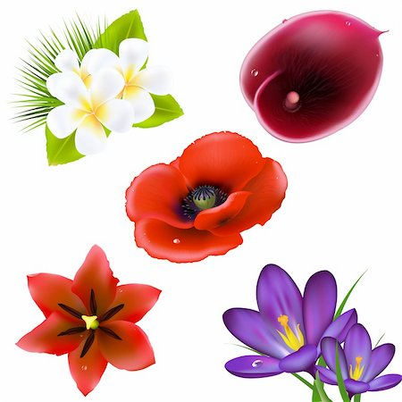 florist vector - Set Of Realistic Flowers, Isolated On White Background, Vector Illustration Stock Photo - Budget Royalty-Free & Subscription, Code: 400-05744938