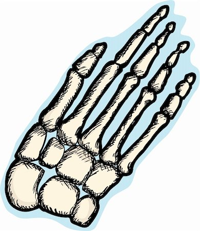 Illustration of the human hand skeletal structure Stock Photo - Budget Royalty-Free & Subscription, Code: 400-05753572