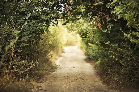 green alley with rural footpath Stock Photo - Budget Royalty-Free & Subscription, Code: 400-05876899