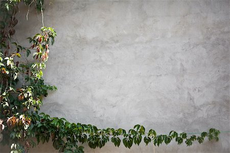 wall with leaves of grape Stock Photo - Budget Royalty-Free & Subscription, Code: 400-05876903